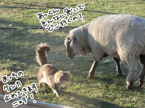 羊の国のビッグフット「ファーム猫検定」3