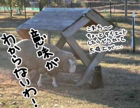 羊の国のビッグフット「ファーム猫検定」4