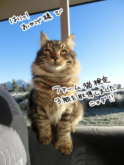 羊の国のビッグフット「ファーム猫検定」5
