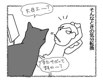 05082016_cat2.jpg