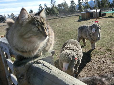 羊の国のビッグフット「丸投げされたニョだ」4