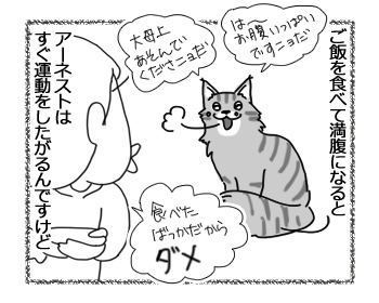 07092016_cat1.jpg