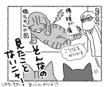 07092016_cat3.jpg