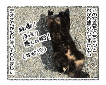 07102016_cat1.jpg