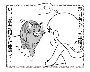 08062016_cat3.jpg