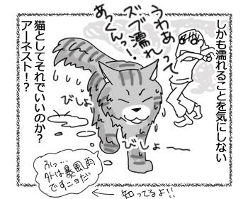 08092016_cat4.jpg