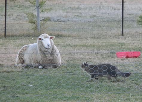 羊の国のビッグフット「こまちとのお別れ」1