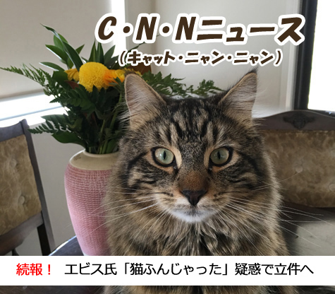 11092016_cat1.jpg