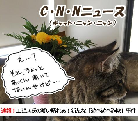 11092016_cat5.jpg