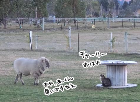 羊の国のビッグフット「ころりん?」6