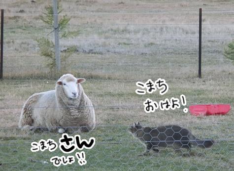 羊の国のビッグフット「ころりん?」7