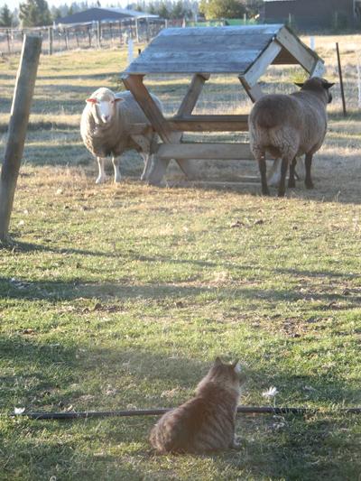 羊の国のビッグフット「ころりん?」5