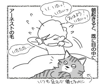 13092016_cat1.jpg