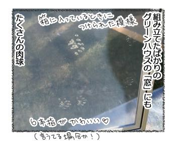 14092016_cat2.jpg