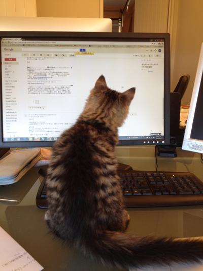 15062016_cat1.jpg