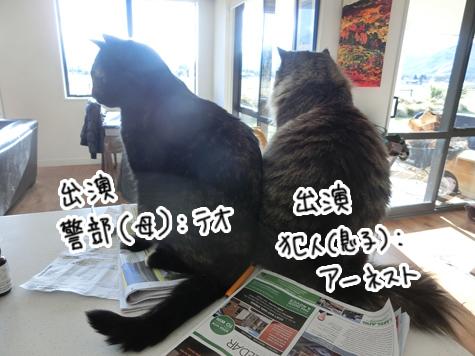 羊の国のビッグフット「猫ドラマ」7
