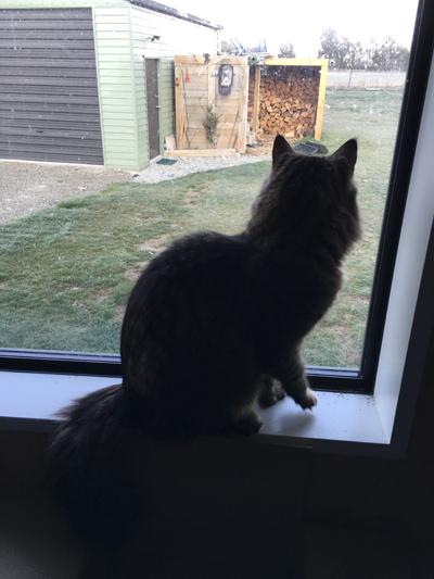15092016_cat1.jpg
