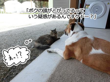 羊の国のビッグフット「カウンセラーあっくん(アーネスト)の、犬のお悩み相談」2