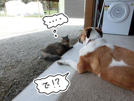 羊の国のビッグフット「カウンセラーあっくん(アーネスト)の、犬のお悩み相談」3