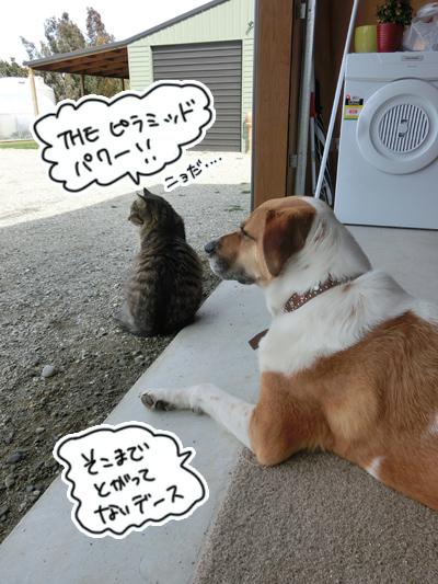 羊の国のビッグフット「カウンセラーあっくん(アーネスト)の、犬のお悩み相談」6