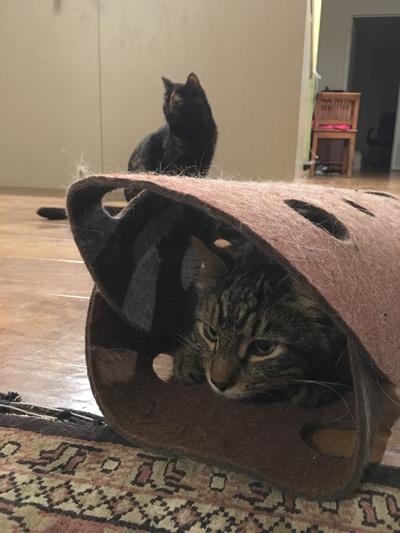 17082016_cat5.jpg