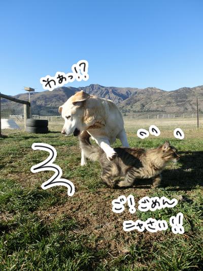 羊の国のビッグフット「犬も歩けば・・・?」1