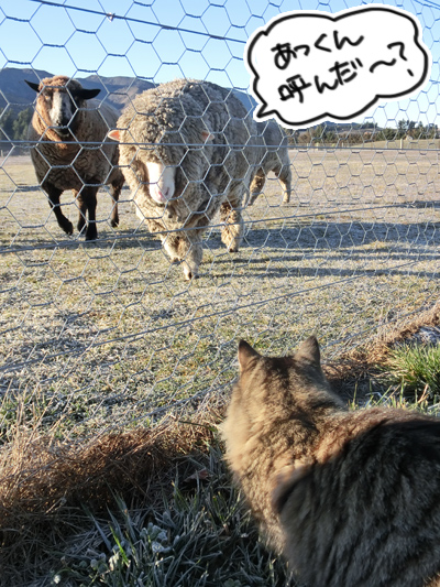 羊の国のビッグフット「シープ・キャット」4