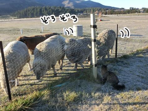 羊の国のビッグフット「シープ・キャット」6