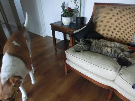 20062016_cat8.jpg