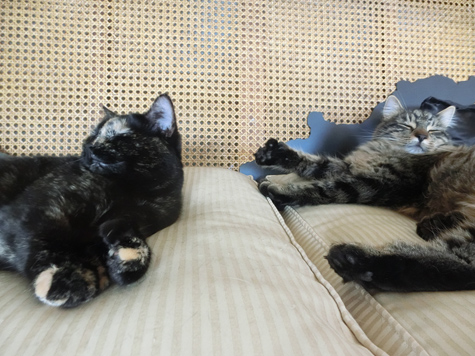 20072016_cat1.jpg