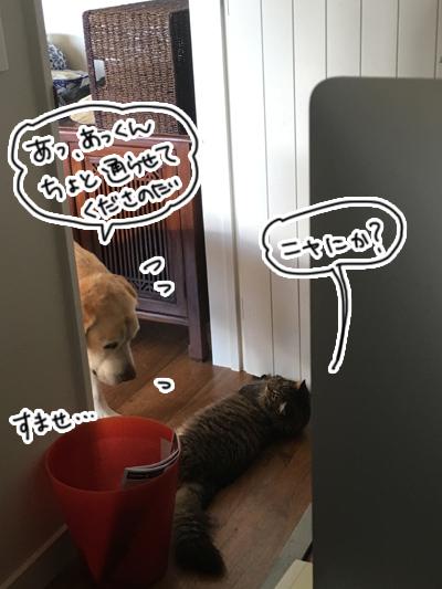 羊の国のビッグフット「犬猫コント」1