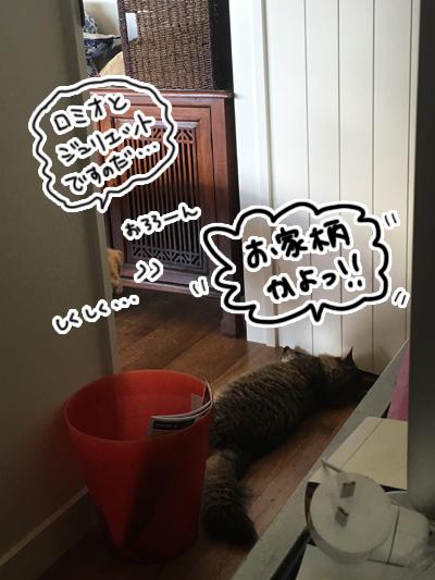 羊の国のビッグフット「犬猫コント」5