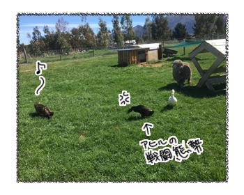 羊の国のビッグフット「猫vsアヒル」4