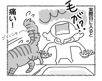 21062016_cat4.jpg