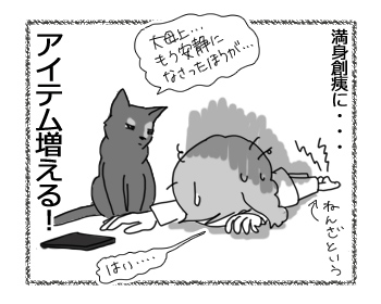 21102016_cat4.jpg