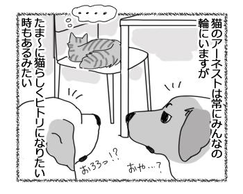 22062016_cat1.jpg