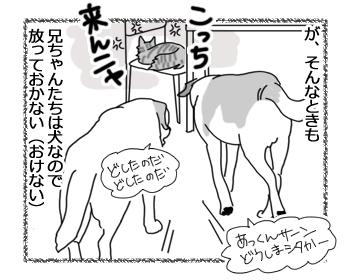 22062016_cat2.jpg