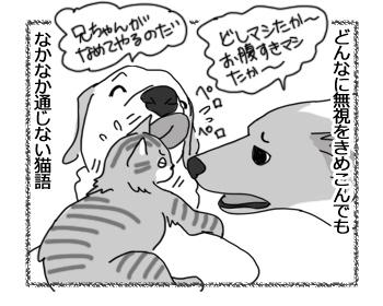22062016_cat3.jpg