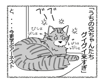 22062016_cat4.jpg