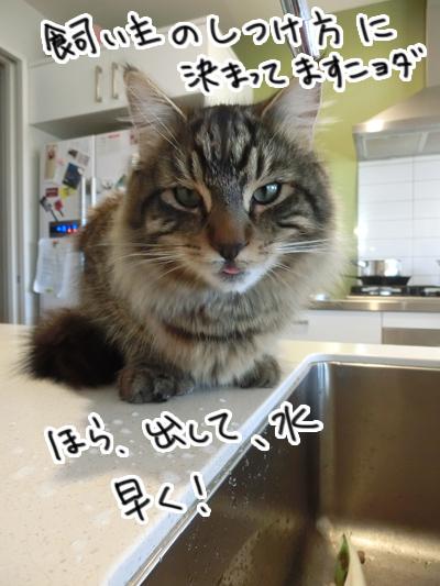 22072016_cat4.jpg