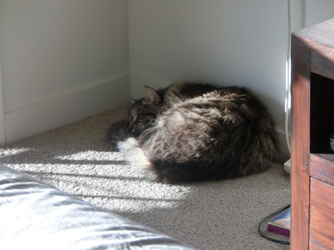 23072016_cat2.jpg
