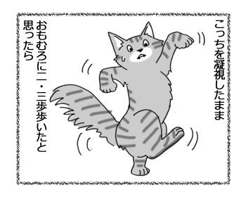 23082016_cat3.jpg