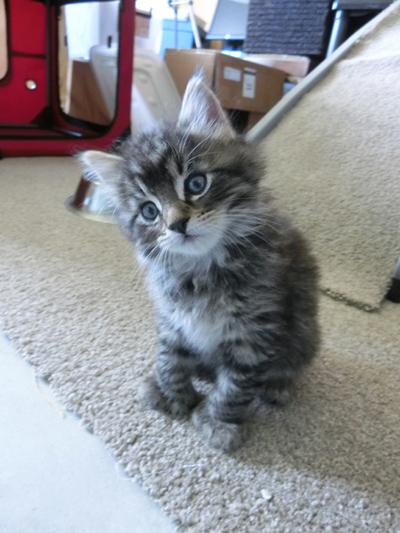 24062016_cat1.jpg
