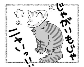 24062016_cat4.jpg
