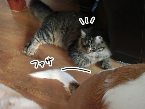 24072016_cat3.jpg
