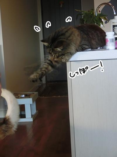 24072016_cat5.jpg