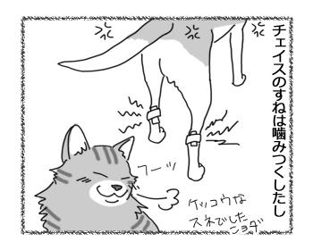 25072016_cat1.jpg