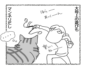 25072016_cat2.jpg