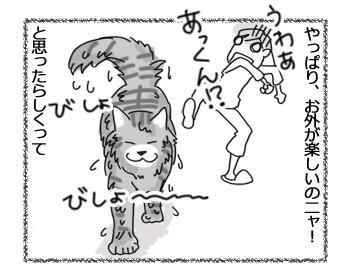 25072016_cat3.jpg