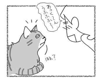 25082016_cat4.jpg